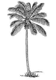 coloring pictures of a palm tree coloring page coconut tree img 13356 veppalodai pinterest
