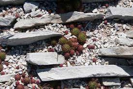 Rocks For Rock Garden A Rock Garden That Rocks The Sensible Gardener