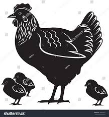mother hen four small chicken stock vector 158025347 shutterstock