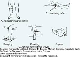 Biceps Reflexes The Nervous System Degowin U0027s Diagnostic Examination 10e