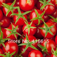 aliexpress com buy 50 pcs italian tree tomato seeds u0027trip l crop