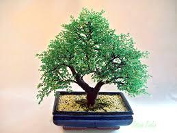 bonsai saule pleureur grand bonsaï en perles de rocaille arbre en perles accessoires