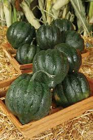 the cucurbit all about cucumbers squash zucchini melons and