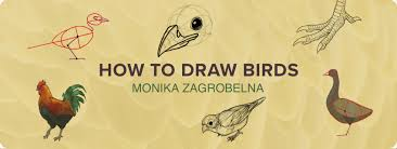 how to draw birds step by step instructions