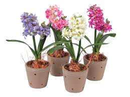 potted flowers potted flowers style landscaping backyards ideas the best of