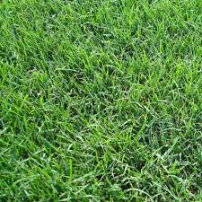 Type Of Grass For Garden Sod U0026 Turf Landscaping The Home Depot