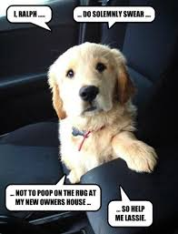 Welcome Home Meme - i has a hotdog forever home funny dog pictures dog memes