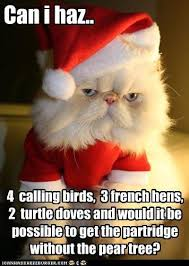 Christmas Cat Memes - lolcats christmas lol at funny cat memes funny cat pictures
