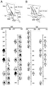 sensors free full text human thalamic somatosensory nucleus