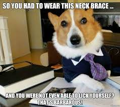Neck Brace Meme - lawyer dog so you had to wear this neck brace and you were