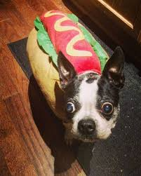 Pet Halloween Costumes 15 Pet Halloween Costumes That Are Making Us Hungry