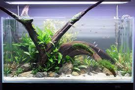 Aquascape Malaysia Malaysian Driftwood