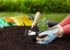 95 best vegetable gardening images on pinterest garden club