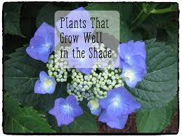 Plants For Patios In The Shade Plants That Will Grow In The Shade Dengarden