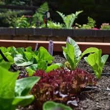 startorganic vegetable garden service 73 photos u0026 13 reviews
