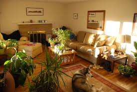 Home Decor Plants Living Room by Indoor Plants For Home Decoration Home Decor