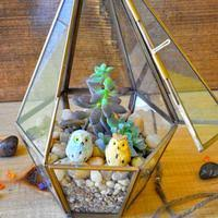 buy terrarium kits online at best prices in india mybageecha