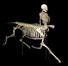 horse skeleton halloween pictures of skeletons odditiesbizarre com