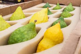 sukkot for sale sukkot sale of etrog green and yellow with pitam the