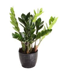 Best Plants For Air Quality by Health Benefits Of Houseplants Hgtv