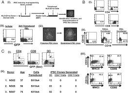 human dendritic cell u2013derived induced pluripotent stem cell lines