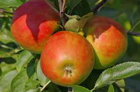 edible fruits fruit trees and other edible plants you can grow that cape cod