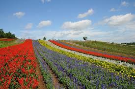 beautiful flower fields around the world world warotter