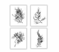 Floors And Decor Dallas by Black And White Botanical Seaweed Print Set Wall Decor Set