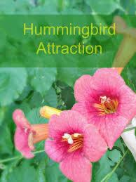 Hummingbird Flowers 202 Best Garden To Attract Hummingbirds Images On Pinterest