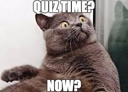 Quiz Meme - meme cat quiz time now my english world