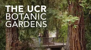 Ucr Botanical Gardens The Ucr Botanic Gardens A Living Museum