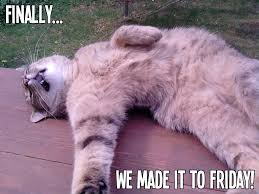 Friday Cat Meme - finally we made it to friday meme boomsbeat