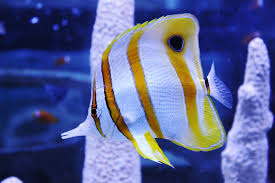 absolutely fish keeping feather dusters in the home aquarium