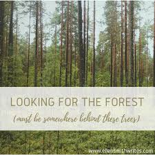 looking for the forest must be somewhere these trees
