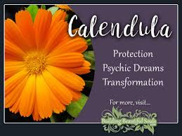 calendula meaning u0026 symbolism flower meanings color meanings