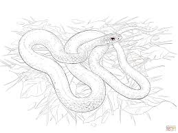 orange ghost ball python coloring page free printable coloring pages