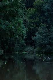 Deep Forest Green The Deep Forest Was Silent Except For The Soft Sound Of Trickling