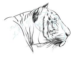 8 best images of drawing pencil sketch of tiger drawing of
