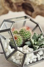 how to make a terrarium decorator u0027s notebook