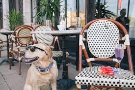 best patio dog room design decor cool under patio dog home ideas