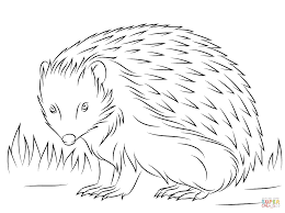 hedgehog coloring pages 17754