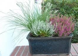 winterharte pflanzen balkon winterharte gräser für den balkon balkon oasebalkon oase