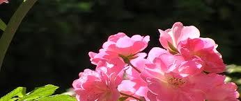 flowers of india mysore karnataka stock footage video 8135284