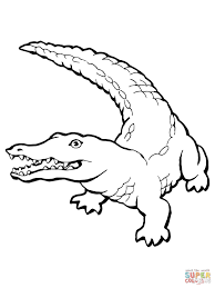drawn crocodile coloring page pencil and in color drawn