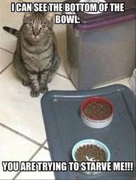 Funniest Cat Meme - funny cat memes reasons you should fall in love with your funny cat