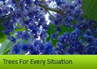 ornamental tree nurseries buy quality trees