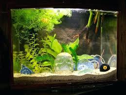 aquarium decoration ideas freshwater cool aquarium decor decorations large cichlid decorating ideas