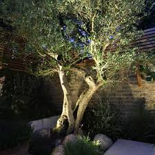 lighting up garden trees search gardens