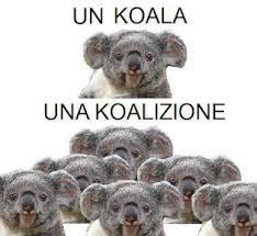 Koala Meme - koala meme by nadinaglamour memedroid