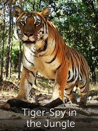 tiger in the jungle episodes season 1 tv guide
